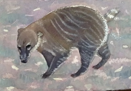 Tailless brown nosed coati found wandering wild near Woodcote in Oxfordshire.