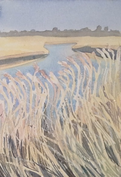 Sun on the reeds yesterday in Snape Maltings