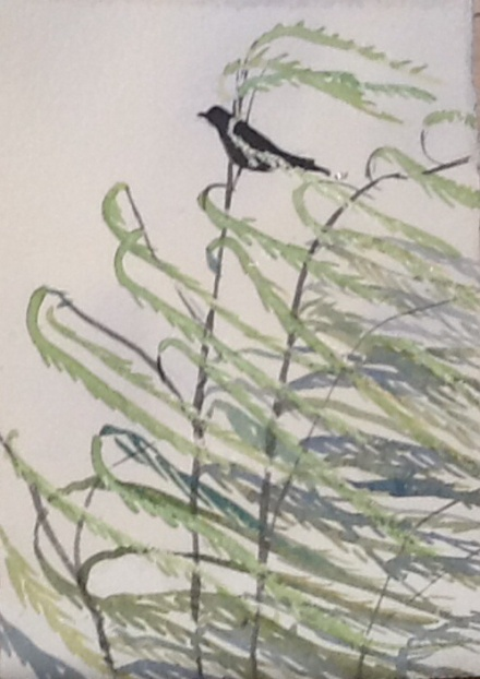 The crow in the wind in the willow